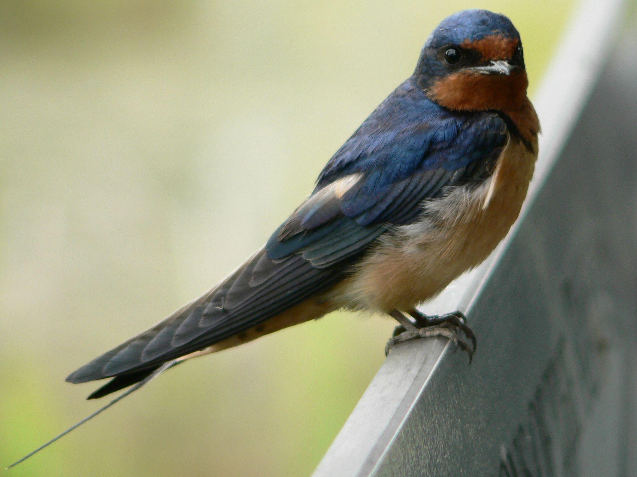 a madarak fogyásának okai)