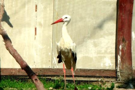 Fehér gólya - 1990