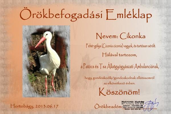 Cikonka