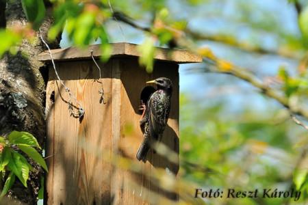 A hét madárdala: Seregély - 2014.04.07