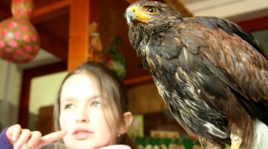 Szerelem a madarak iránt - 2014.05.16