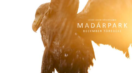 Madárpark - December töredéke - Leskó Ádám rövidfilmje