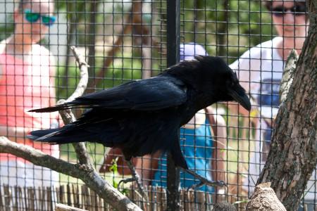 Pünkösdi madárkirály a Hortobágyon