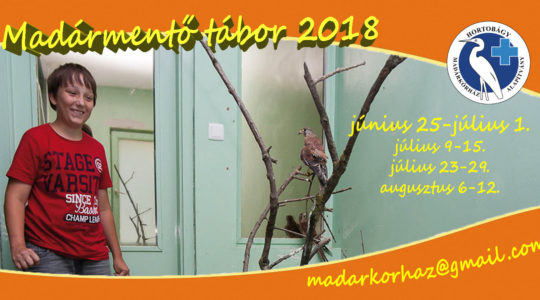 Madármentő tábor 2018