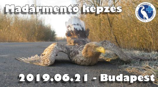 Madármentő képzés - 2019-06-21 - Budapest