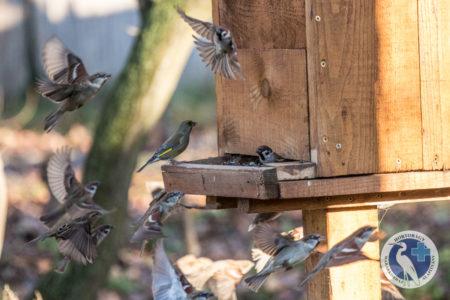 130 éve etetjük a madarakat