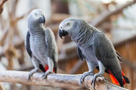 Jószívű madarak