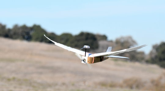 PigeonBot azaz galambrobot