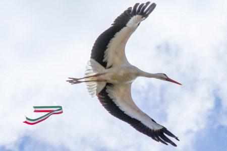 Szabadság, gólyák, szerelem - Március 15.-e a Madárkórházban