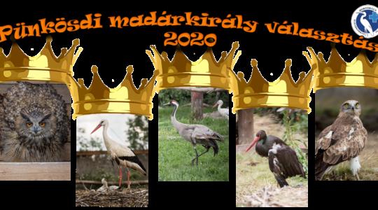 Pünkösdi madárkirály választás - 2020