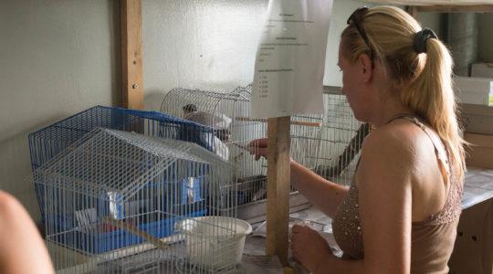 Idén is nagy sikere volt a madármentő táboroknak