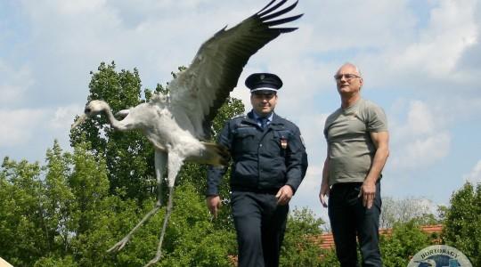 Szabadon távozhatott a Polgárról érkezett daru - 2016.04.27