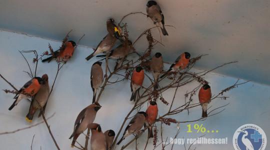 Hortobágyra kerültek a csempészett madarak