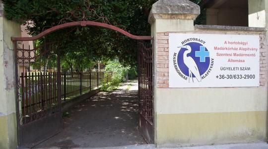 Madármentő állomás nyílt Szentesen