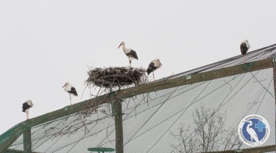Kell e félnünk a gólyáktól a koronavírus miatt?