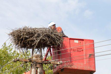 Húsvéti gólyatojás mentés