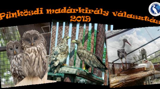 Pünkösdi madárkirály választás - 2019