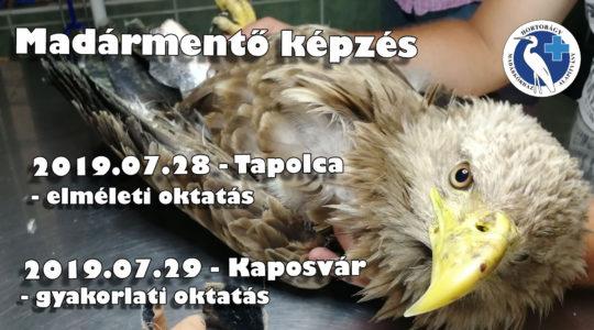 Madármentő elméleti képzés Tapolca és gyakorlati képzés Kaposvár!