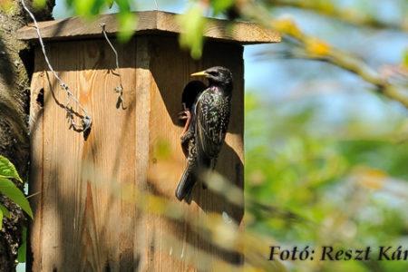 A hét madárdala: Seregély - 2020.04.06